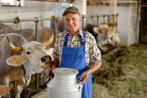 Bauer im Kuhstall
